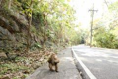 Kleiner Affe, der auf Straße in Thailand sitzt Lizenzfreies Stockfoto