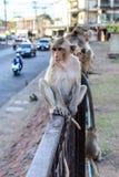 Kleiner Affe, der auf Zaun in der Stadt sitzt Stockbilder