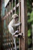 Kleiner Affe, der auf Zaun sitzt Lizenzfreie Stockbilder