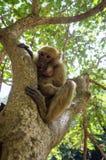 Kleiner Affe, der in einem Baum schleicht Lizenzfreie Stockfotografie
