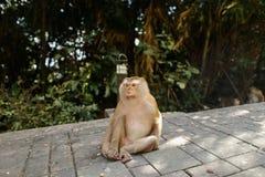 Kleiner Affe, der im Park, Bäume im Hintergrund sitzt Lizenzfreie Stockfotografie