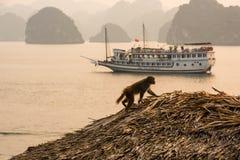 Kleiner Affe, der schöne Halong-Bucht übersieht Lizenzfreies Stockfoto