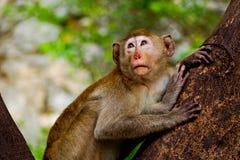 Kleiner Affe im Dschungel Stockbilder