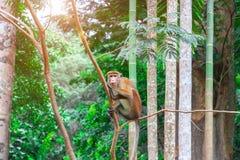 Kleiner Affe im wilden Stockfotos