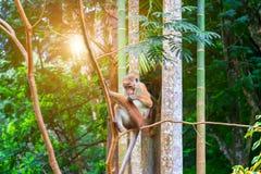 Kleiner Affe im wilden Stockfoto