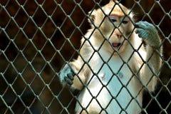 Kleiner Affe im Zoo lizenzfreies stockbild