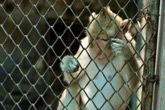 Kleiner Affe im Zoo lizenzfreies stockfoto