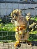 Kleiner Affe im Zookäfig lizenzfreie stockbilder