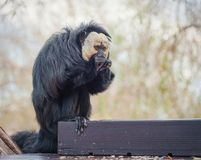 Kleiner Affe isst am Zoo Lizenzfreie Stockbilder