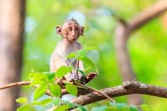 Kleiner Affe (Makaken Krabbe-essend) auf Baum Lizenzfreie Stockfotografie
