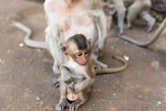 Kleiner Affe mit Elternteil Stockbild