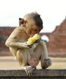 Kleiner Affe mit Lebensmittel Stockbild