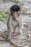 Kleiner Affe schüchtern Lizenzfreies Stockbild