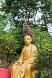 Kleiner Affe sitzt auf Buddha-Statuenkopf Lizenzfreie Stockfotografie