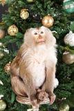 Kleiner Affe und der Baum des neuen Jahres Stockfotografie