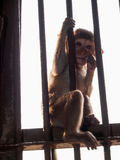 Kleiner Affe und der Fall Lizenzfreie Stockfotos