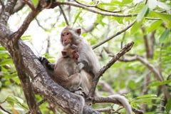 Kleiner Affe und Mutter Stockfotografie