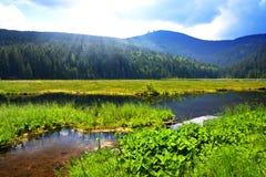 Kleiner Arbersee湖在国立公园巴法力亚森林里,德国 免版税库存图片
