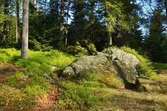 Kleiner Arbersee is een meer in Bayerischer Wald, Beieren, Duitsland Royalty-vrije Stock Foto's