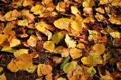Kleiner Autumn Leaves Lizenzfreies Stockfoto