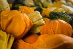 Kleiner Autumn Squash Lizenzfreies Stockfoto