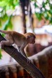 kleiner Babyaffe auf einem Baumast Stockfoto