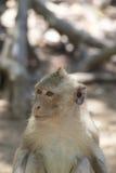 Kleiner Babyaffe im Affewald Lizenzfreie Stockfotografie