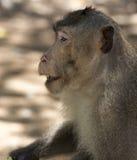 Kleiner Babyaffe im Affewald Stockfotos
