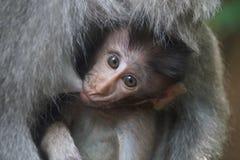Kleiner Babyaffe stillen Stockfoto