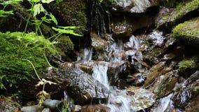 Kleiner Bach mit kaltem Wasser stock video