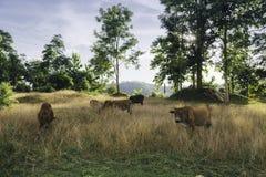 Kleiner Bauernhof Stockfotografie