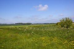 Kleiner Bauernhofteich in den szenischen Yorkshire-Wolds im Frühjahr Stockbild