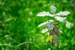 Kleiner Baum Stockfoto