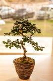 Kleiner Baum Stockfotografie