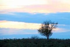 Kleiner Baum auf der Wiese Lizenzfreies Stockbild
