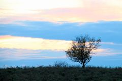 Kleiner Baum auf der Wiese Stockbilder