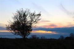 Kleiner Baum auf der Wiese bei Sonnenuntergang Stockbilder
