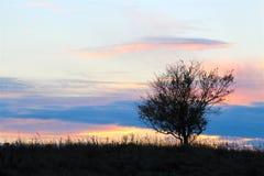 Kleiner Baum auf der Wiese bei Sonnenuntergang Lizenzfreie Stockbilder