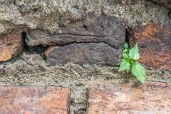 Kleiner Baum auf einer alten Wand Stockfotos
