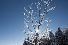 Kleiner Baum bedeckt mit Schnee an einem Wintertag lizenzfreie stockfotos
