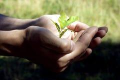 Kleiner Baum in den Händen Stockfotografie