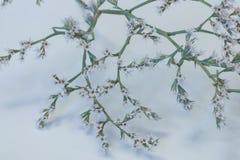 Kleiner Baum in der Blüte lizenzfreies stockfoto