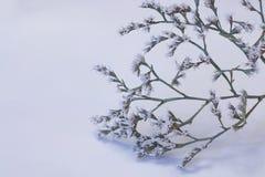 Kleiner Baum in der Blüte stockfotos