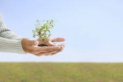 Kleiner Baum in der Hand Lizenzfreie Stockfotos