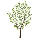 Kleiner Baum gefärbt auf Hintergrund Stockfotos