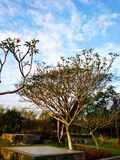 Kleiner Baum im Hintergrund des Parks und des blauen Himmels lizenzfreie stockbilder