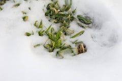 Kleiner Baum im Schnee Stockfotos