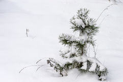 Kleiner Baum im Schnee an einem kalten Tag Stockbilder