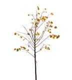 Kleiner Baum mit Gelbblättern und -vogel auf Niederlassung in Herbst seaso Stockfotos