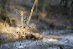 Kleiner Baum vor dem Fluss stockfotos